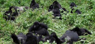 6 Days Gorilla Trekking-Bwindi Impenetrable Forest National Park