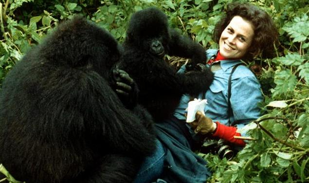 Dian Fossey with the Gorillas