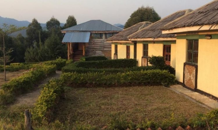 Eco Marvels Gorilla Lodge