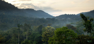 Weather and Climate in Bwindi