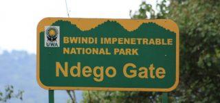 Why Visit Bwindi