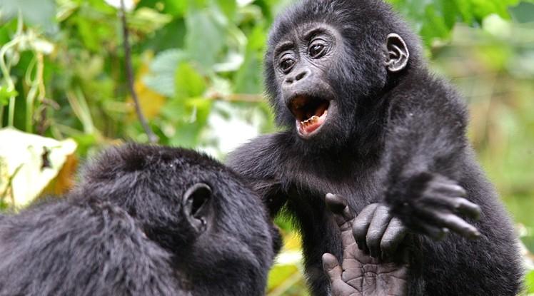3 Day Bwindi Gorilla Trekking Safari