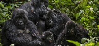 Gorilla trekking sectors