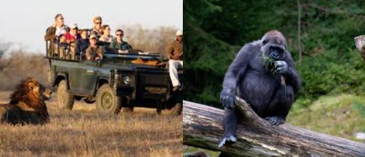 Game Viewing & Gorilla Trekking