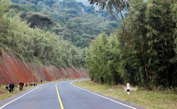 Getting to Bwindi Impenetrable Forest National Park