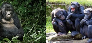 Primate Safari