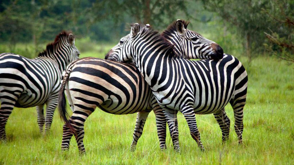 4 Days Gorilla trekking and Lake Mburo wildlife safari