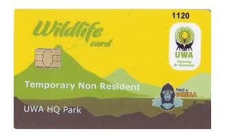 Cheap gorilla permits