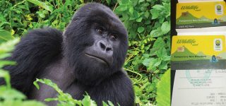 Booking Gorilla trekking