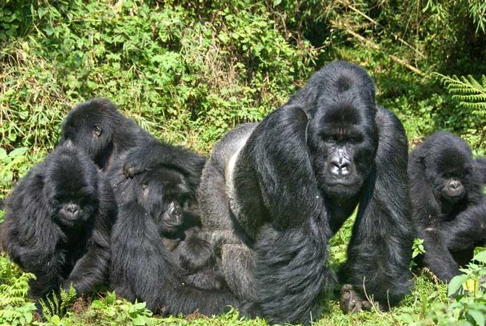 5 days Lake Mburo, Bwindi gorillas and Lake Bunyonyi safari