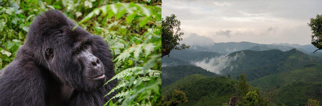 Bwindi Impenetrable Forest National park & Virunga National park