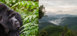 Bwindi Impenetrable Forest National park & Virunga National park