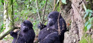 Bwindi Impenetrable National Park & Volcanoes National Park