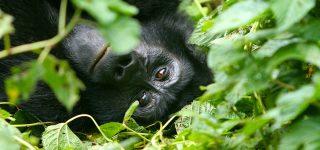 Cost of gorilla trekking in rwanda