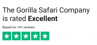 Gorilla safari company review