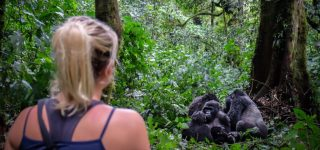 How difficult is gorilla trekking