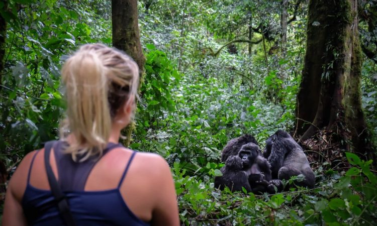How Difficult Is Gorilla Trekking Bwindi Impenetrable National Park