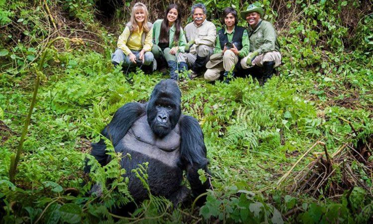 How easy is gorilla trekking
