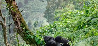 How long does gorilla trekking take