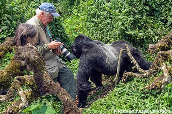 Uganda Gorilla Trekking in December
