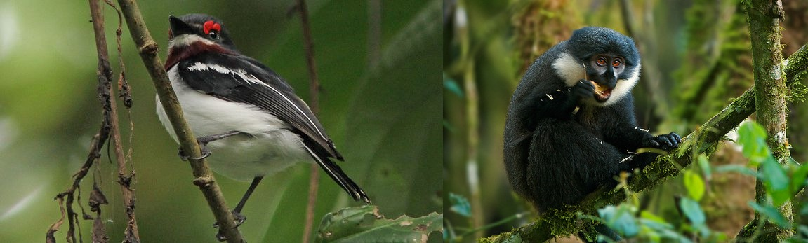 other  wildlife and bird species - bwindi forest national park