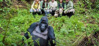Gorilla Trekking Age Restriction