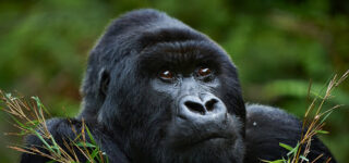 4 days Uganda Gorilla trekking and Mount Mgahinga hiking safari
