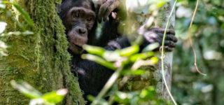 5 Days Kahuzi Beiga & Nyungwe Forest safari