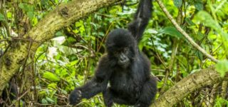 5 days Uganda Gorilla trekking and Rwanda Hiking safari