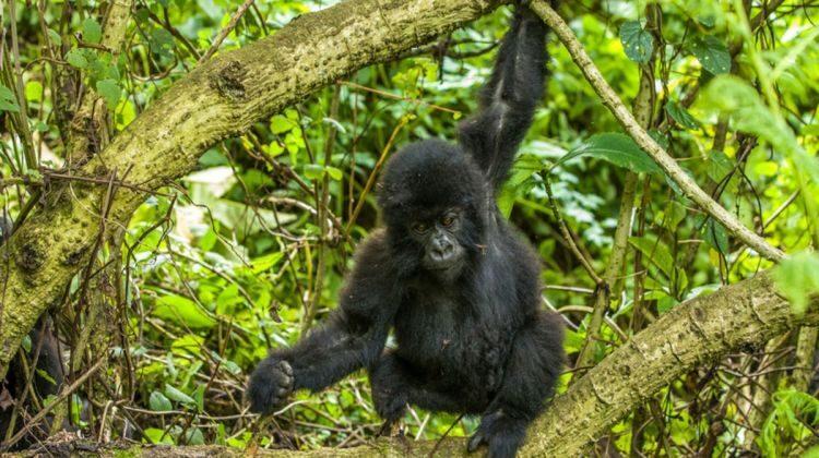 5 days Uganda Gorilla trekking and Rwanda Hiking safari