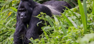 6 Days Ngila Classic Package Congo safariws