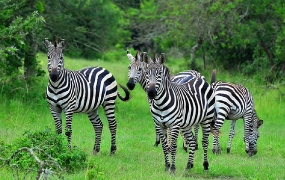 13 Days Uganda Primate Safari and Big 5 tour