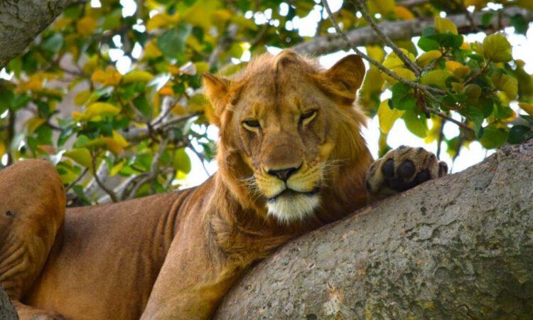 8 Days Uganda Rwanda safari (Gorillas, wildlife and Lake Kivu)