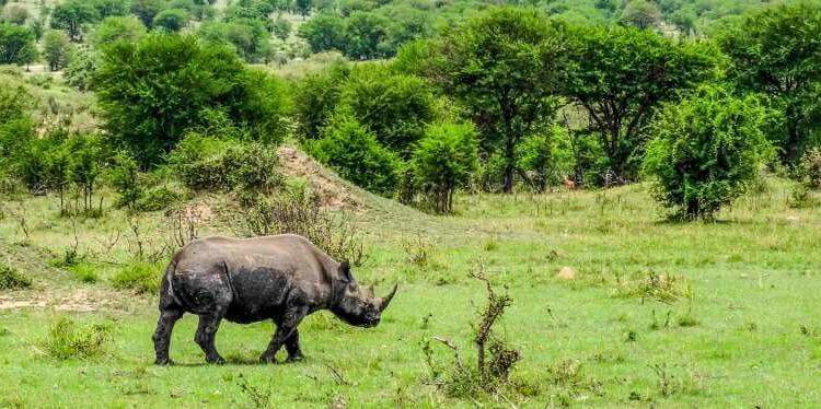 4 Days Rwanda Double Gorilla trek