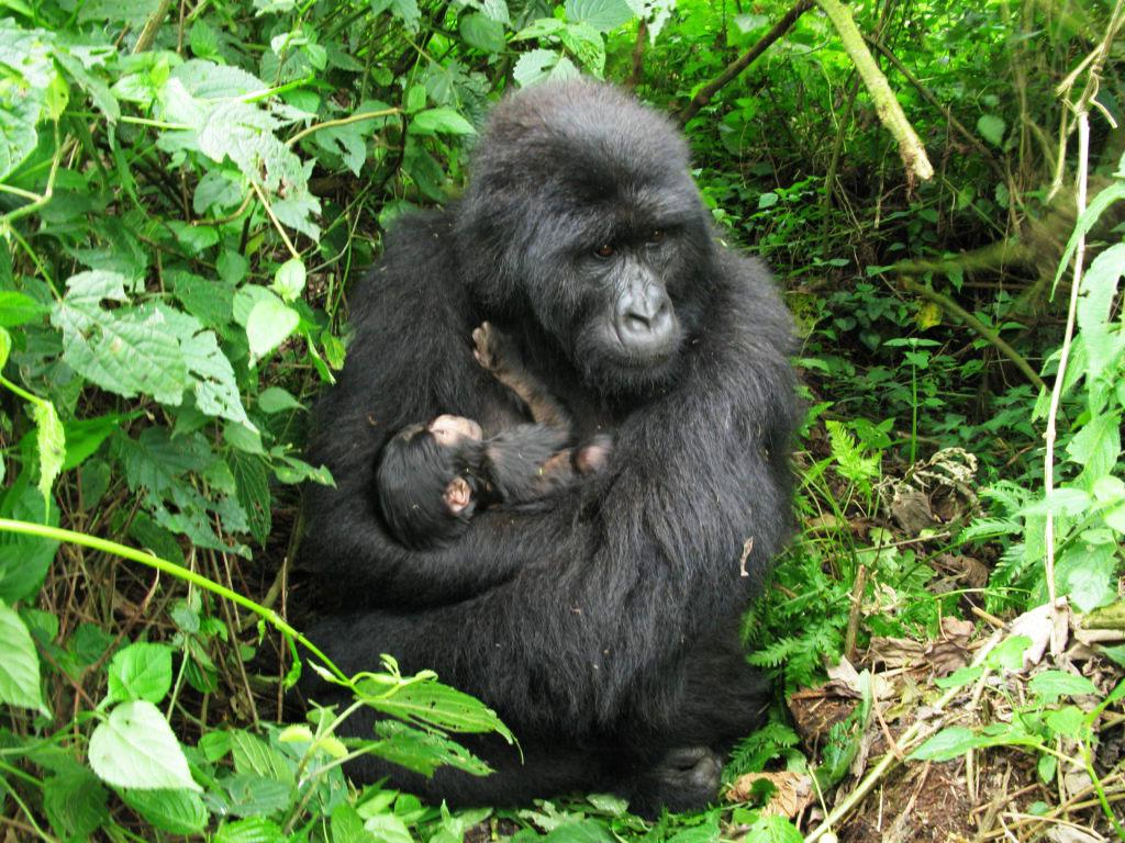 20 Days Best of Uganda Safari