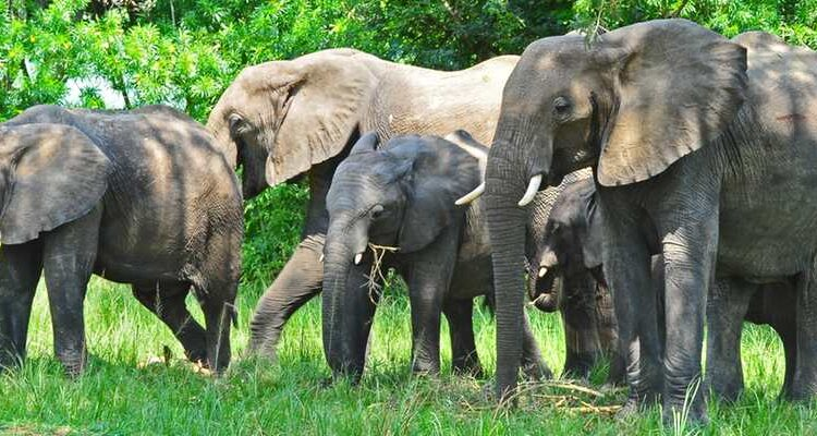 15 Days Uganda Wildlife and Cultural Safari