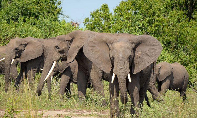 12 Days Rwanda Uganda Safari