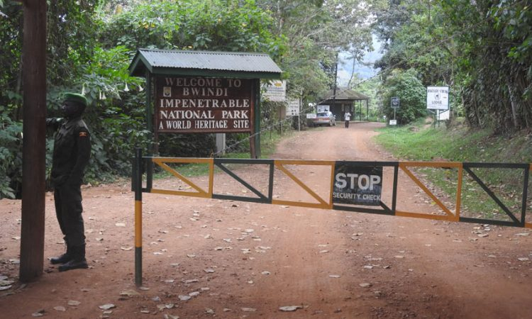 2021 Park Entry fees for Bwindi Impenetrable National Park
