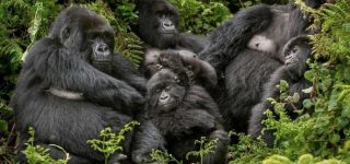Why Buhoma Sector is the most popular in Bwindi