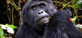 5 Day Best of Uganda Primates Safari