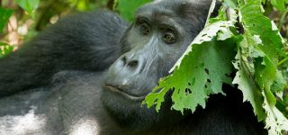 3 Days Uganda Gorilla Trekking & Wildlife Safari