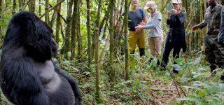 What is Gorilla Trekking?
