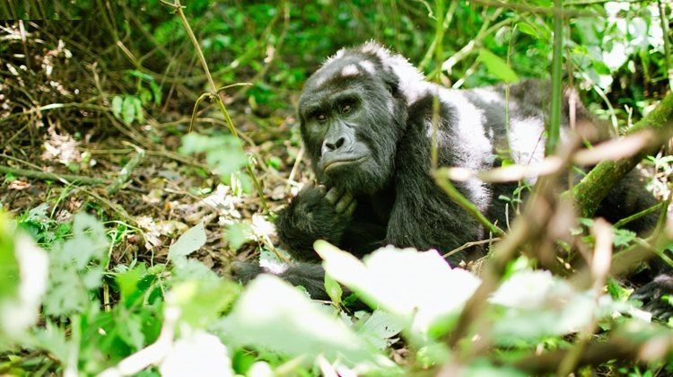 5 Luxury Activities in Bwindi Impenetrable National Park
