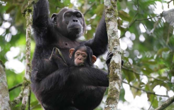 8 Days Uganda Primates Tour