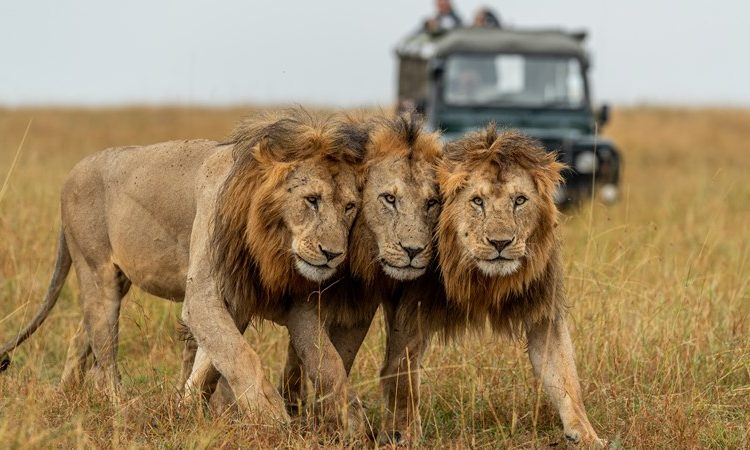 5 Days Uganda Gorilla and wildlife fly in safari