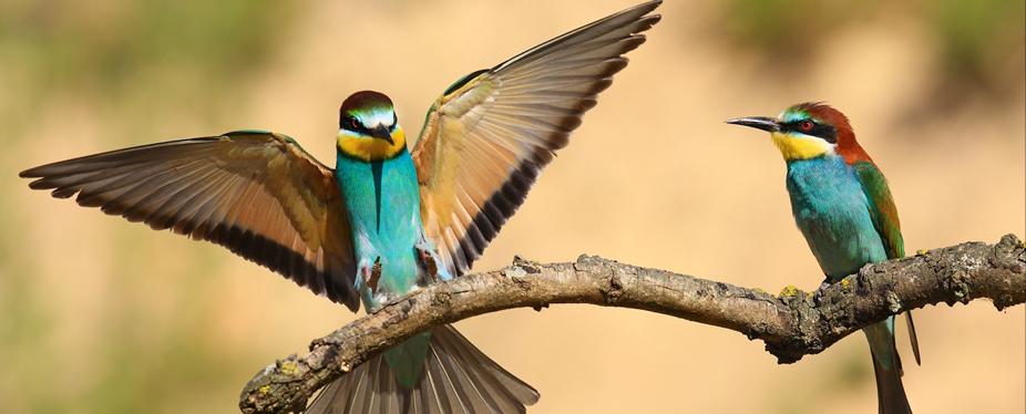 Birding in Virunga national park