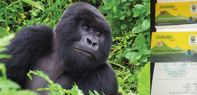 2022 Gorilla trekking permits in Bwindi impenetrable national park